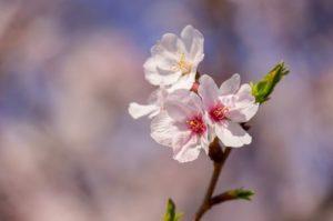 お味噌汁に合う 春が旬の食材の特徴